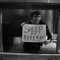 Sheep Go Rarrrrr!